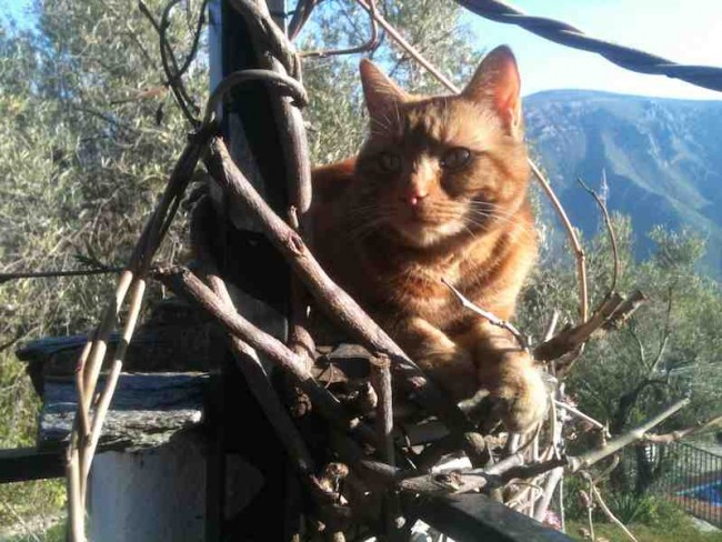 Cat at Almond Hill House, Andalucia, Spain